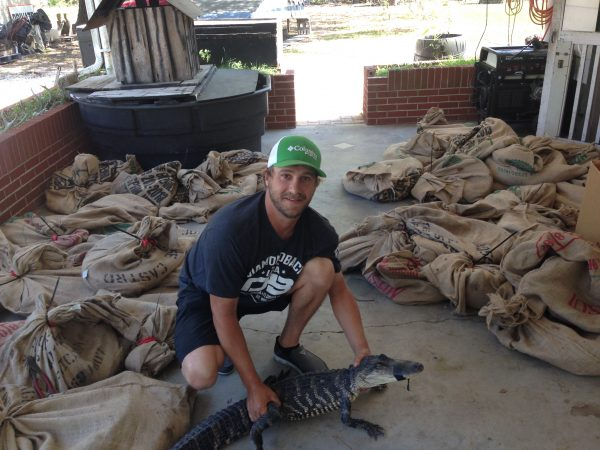 Rusty preparing alligators to be released into the wetlands.